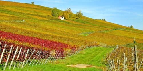 Top 15 Agricultural Producing Countries in the World