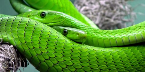 6 countries with the most snake bites in the world