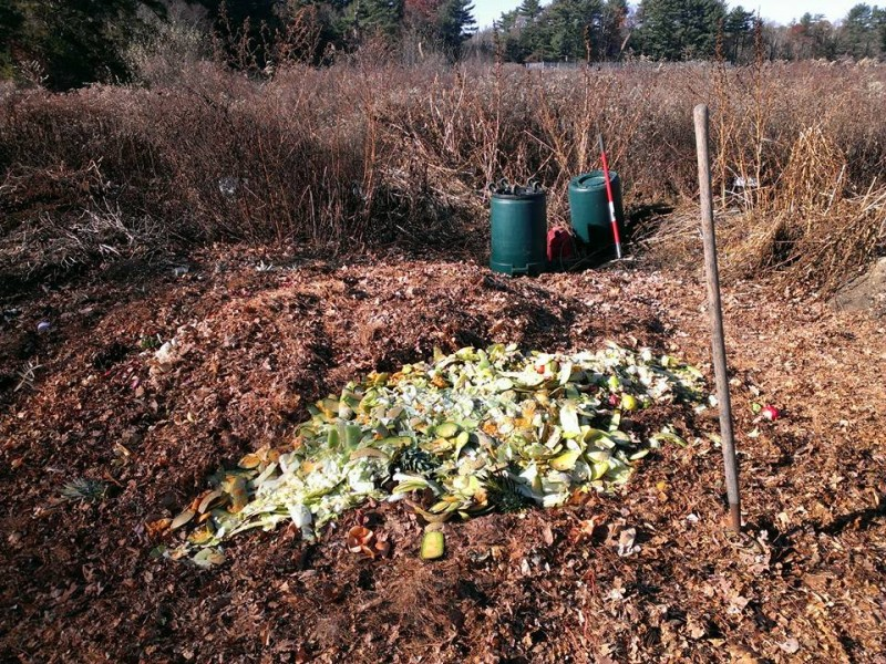 Organic food scraps sit atop our growing compost pile! This pile is maintained thanks to the efforts of Tim Watts.