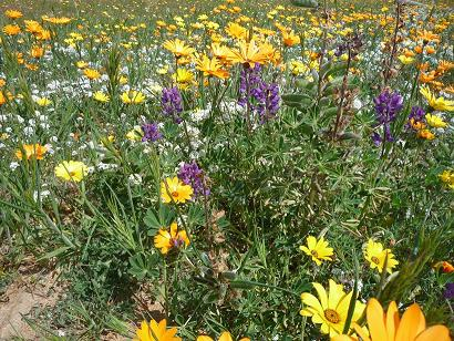 Valley Center Flowers