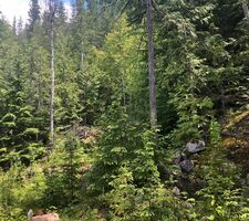 Gray Creek Vacant Land for sale:    (Listed 2021-01-16)