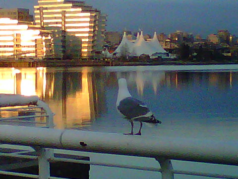 seagull looking at olympic village.jpg