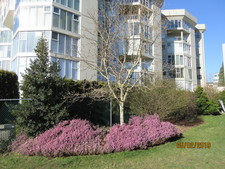 WHITE ROCK Apartment for sale: WHITE ROCK SQUARE 11 2 bedroom 1,325 sq.ft. (Listed 2019-02-06)
