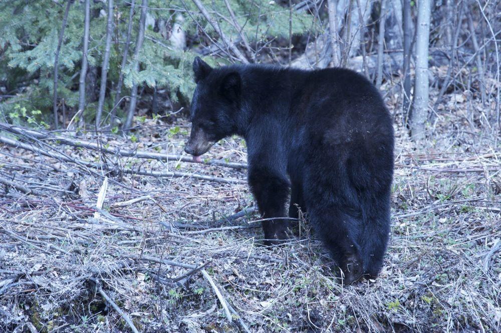 J&Th  Bear3.jpg