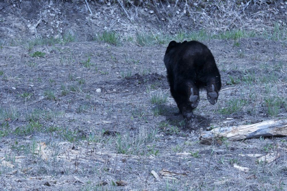 J&Th  Bear2.jpg