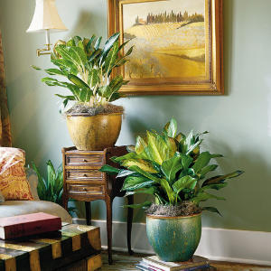 houseplant.jpg