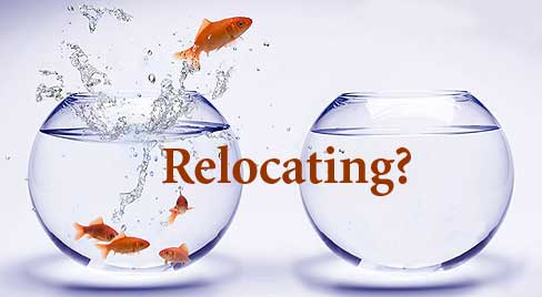 Relocating gold fish