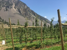 Keremeos 9.97 acres orchard for sale:  Studio 1,600 sq.ft.