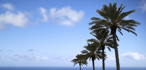 banner palm 2