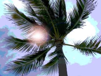 palm + sun