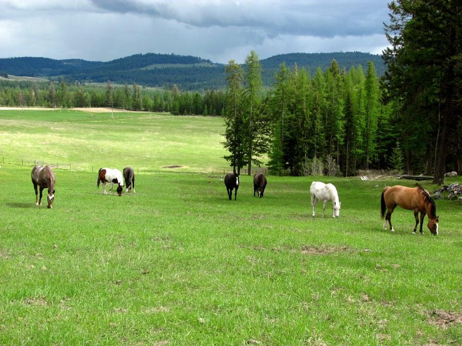 horse herd1.jpg