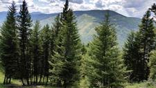 Carmi Beaverdell Kelowna BC Vacant Land near Crown Land and Lake for sale: King Solomon Mountain MLS listing realty real estate Jennifer Brock Macdonald Realty