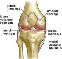 Vancouver Orthotics Patellar Tendonitis