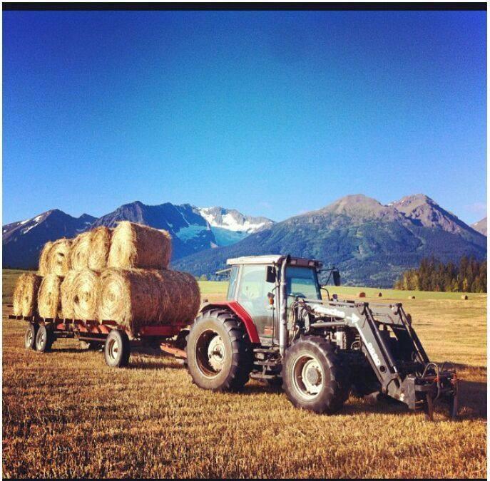 MF 6290 Tractor & Horst 12 Wagon