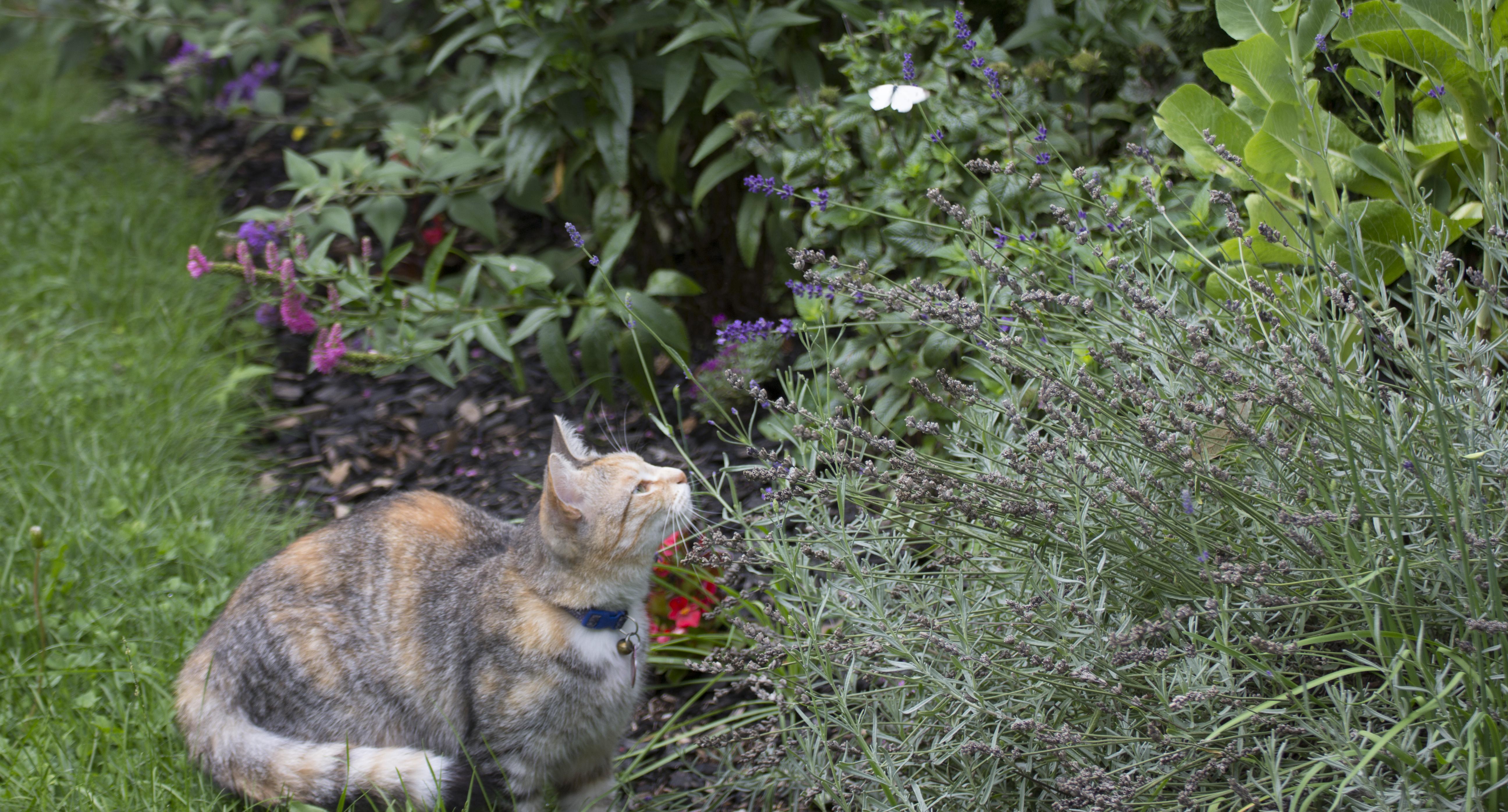 In the Backyard - maitland.jpg