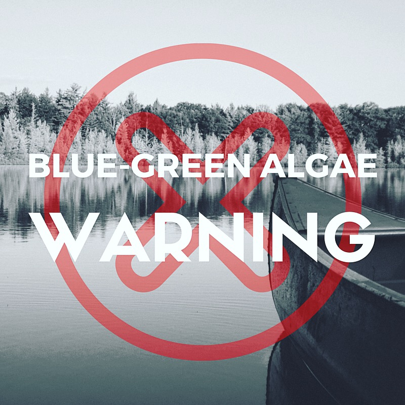 Blue - Green Algae Warning