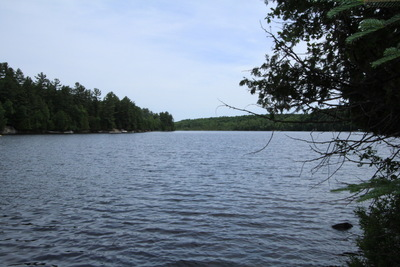 Lake Cecebe Waterfront Lot for sale: 300' frontage, over 2 1/2 acres