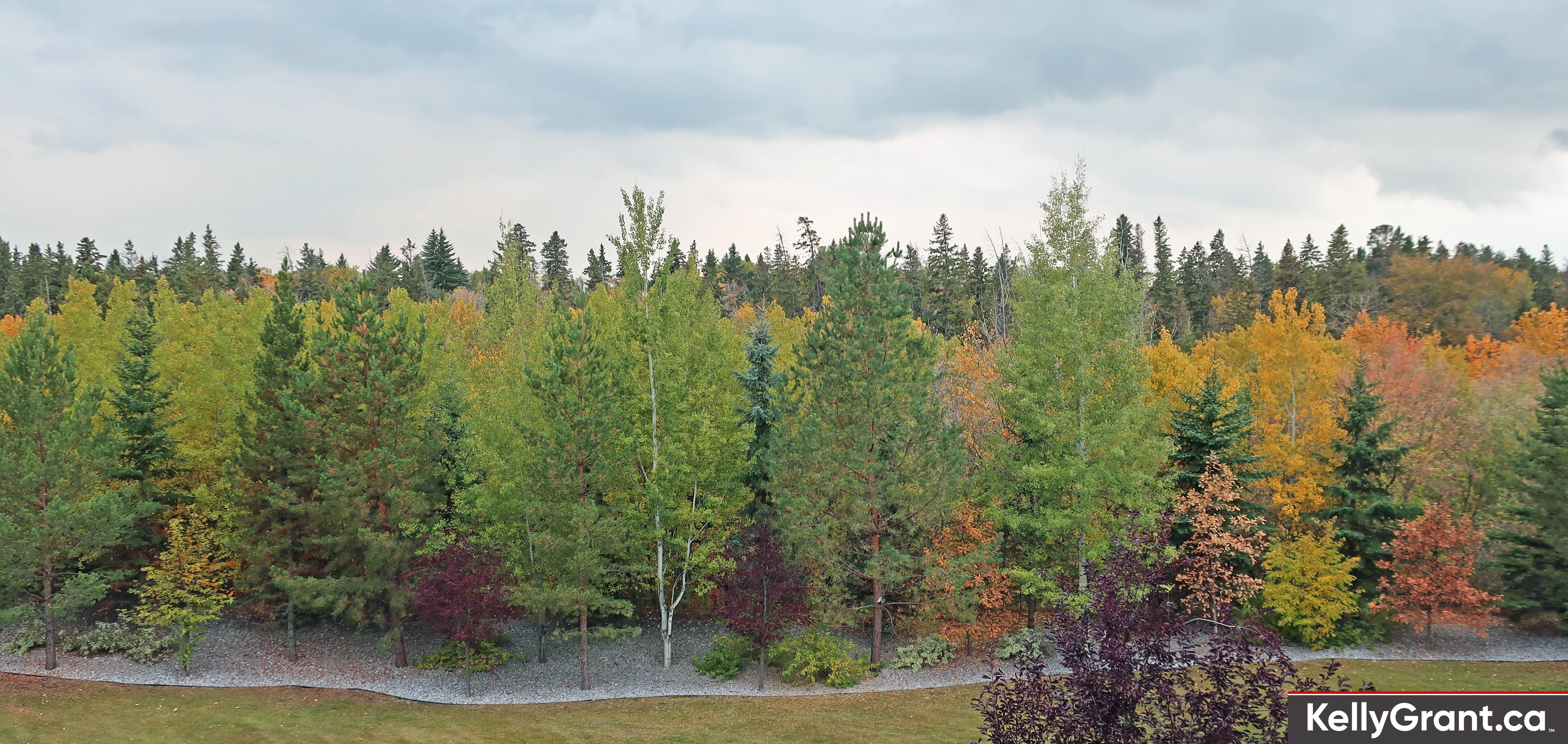 Kelly Grant Mill Creek Autumn