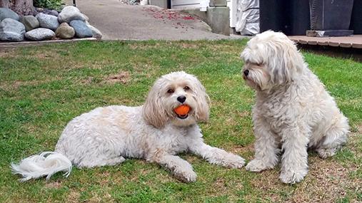 Dogs 507 x 285.jpg