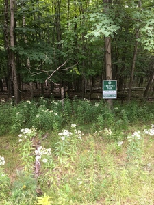 Lake of Bays  Vacant Land for sale: Vacant Lot Land  (Listed 2018-01-26)