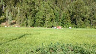 Salmo Land for sale:  Studio  (Listed 2017-12-06)