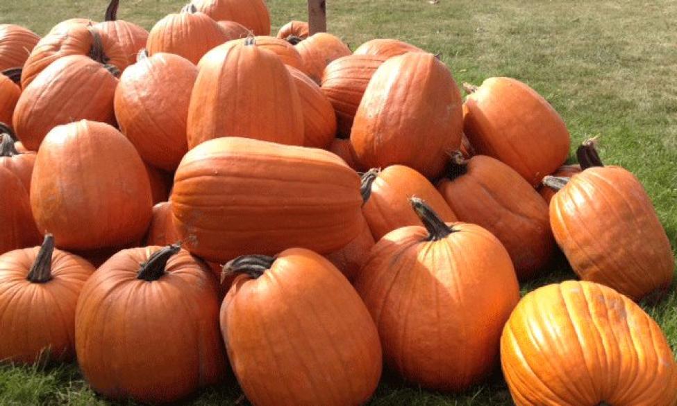 pumpkin mania.png