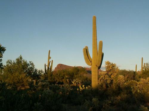 Sunny Arizona
