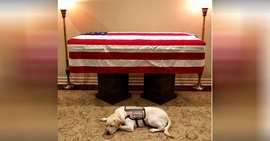 Preview_sully-service-dog-1