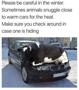 Preview_animals_on_car_hood
