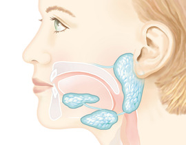 Preview_illustration-salivary-glands
