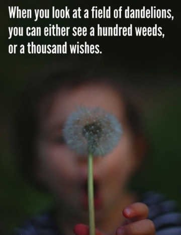 Wall_dandelions_seeds_or_wishes