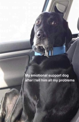 Preview_emotional_support_dog