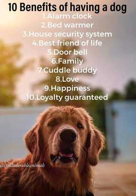 Preview_dog_benefits