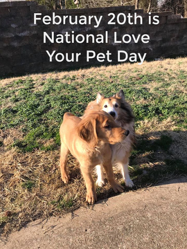 Preview_national_love_your_pet_day