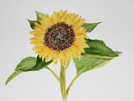 Preview_sunflower_by_jane_3-12-20