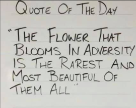 Preview_quote_of_the_day