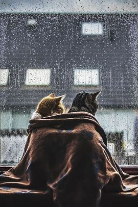 Preview_caturday_rainy_2