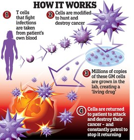 Preview_t-cell_immunotherapy