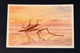 Preview_driftwoodbeach_by_jane_8-9-20