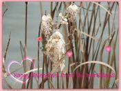 Winter in the marsh
