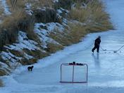 dog hockey
