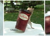 Chippys Love Timmies too