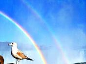 Magical Seagull