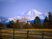 Snow-topped Mt Baker