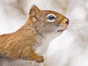 Écureuil / Squirrel