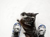 My Snowshoe companion