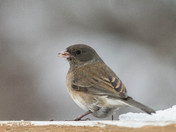 I Love Juncos