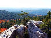 Pine Stands Alone On Mountain Top