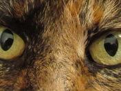 Punkin Eyes