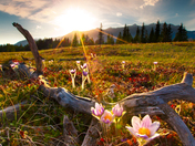 Bow Valley Spring